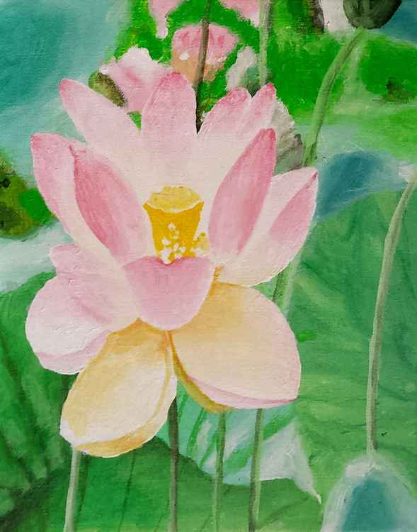 Water Lily - Free Shipping