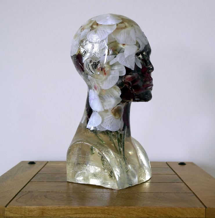 Orchid Brain - Image 0