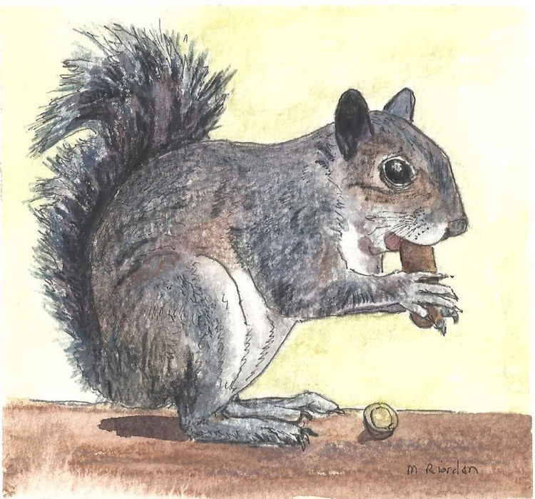 SQUIRREL NIBBLING ON A NUT - Image 0