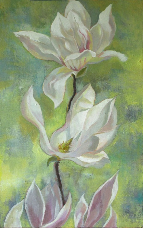 Springtime for magnolia - Image 0