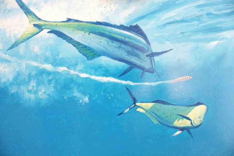 Bull Dolphin Mahi Mahi and streamer