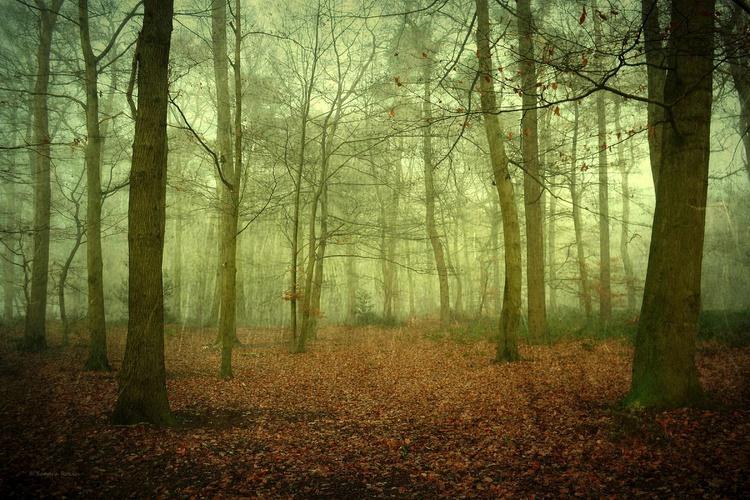 Cloud Forest - 90 x 60 cm Hahnemühle - Image 0