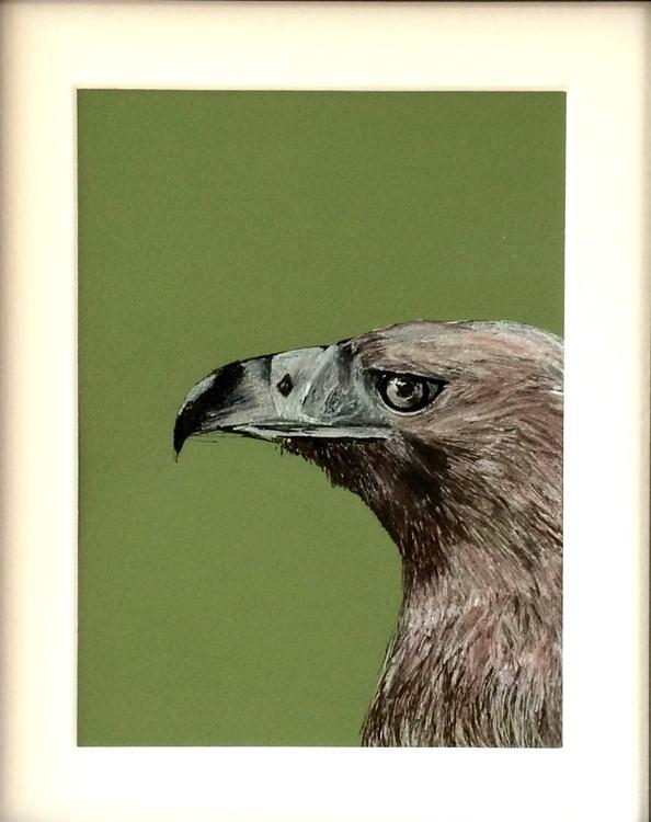 Golden Eagle - Image 0