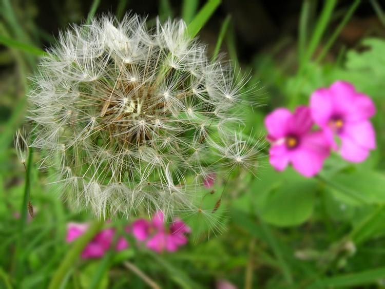 Soft garden - Image 0