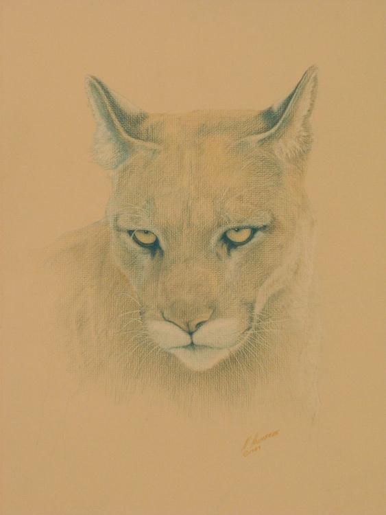 Cougar - Image 0