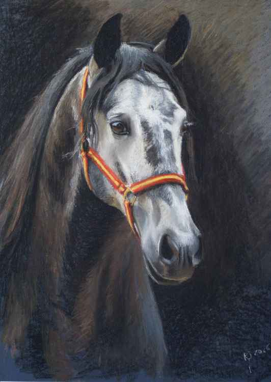 Portrait of stallion Enterado -