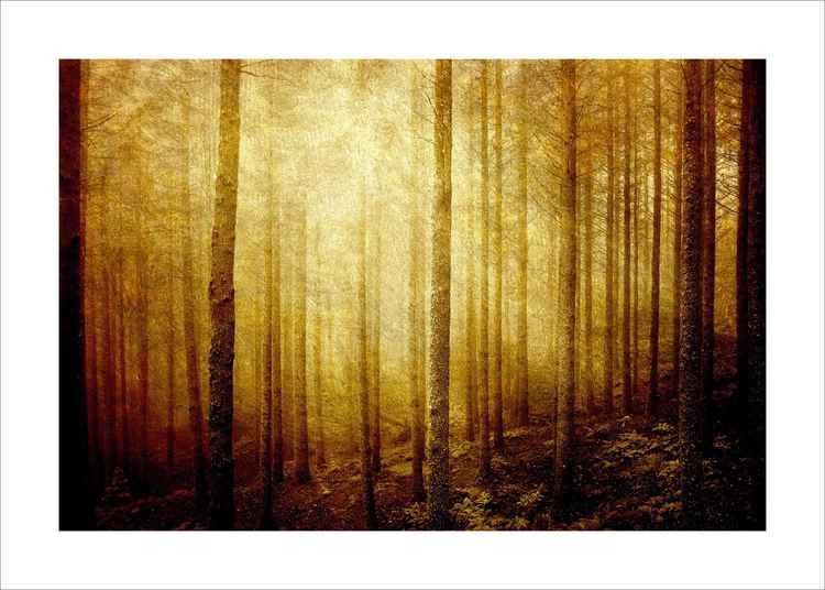 Woodland Art -