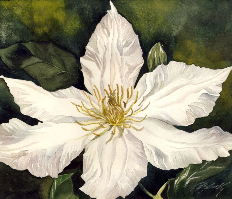 clematis in white - Image 0