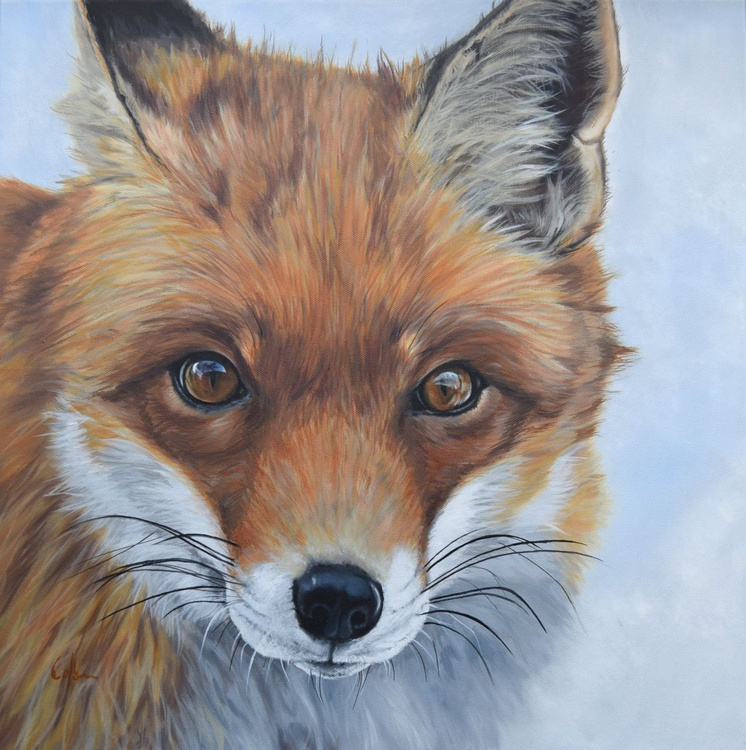 'Red Fox' - Image 0