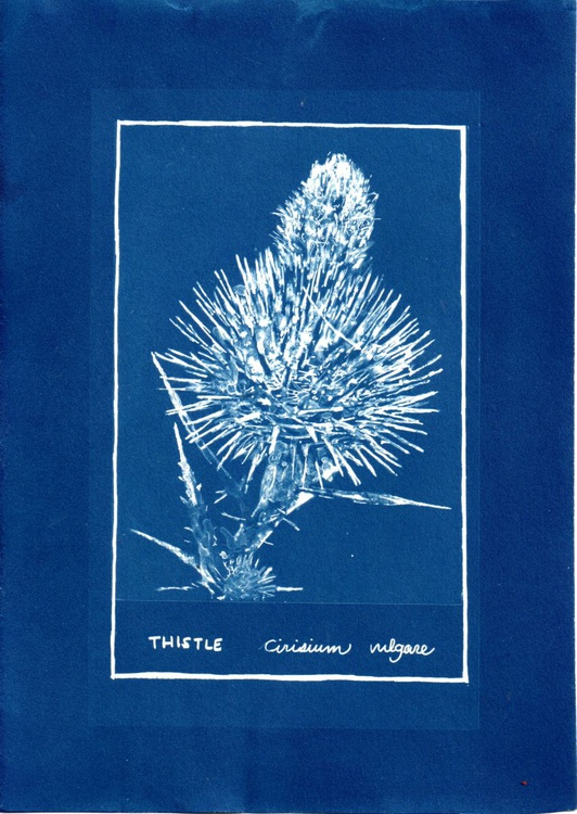 Thistle, from the series of Invasive Weeds of Australia - Image 0