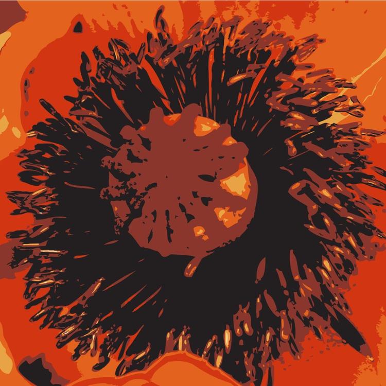 Poppy#1 - Image 0