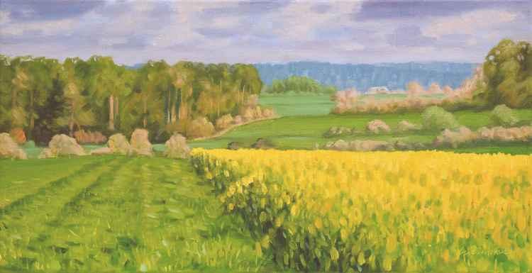 Yellow fields 02