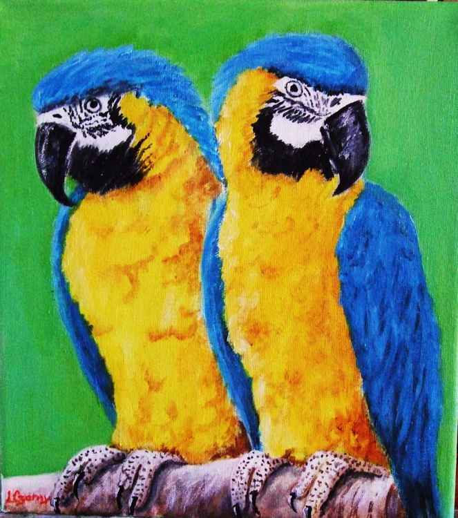 Macaw Brothers