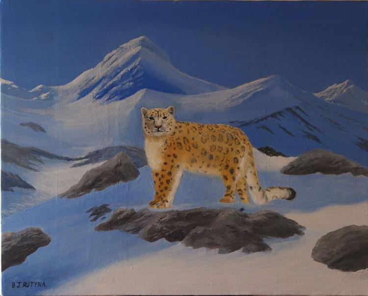 Snow leopard in Winter - Image 0