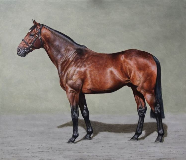Thoroughbred Stallion - Image 0