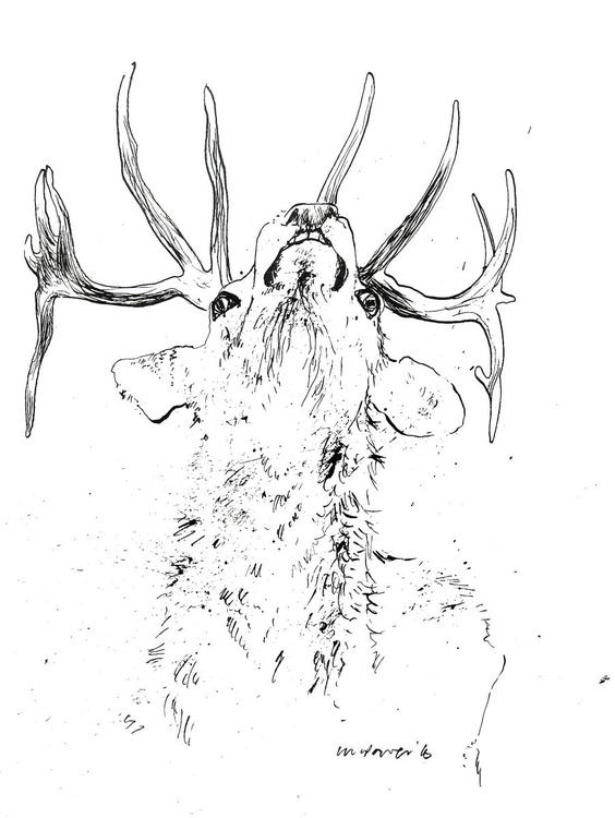 Angry Stag - Image 0