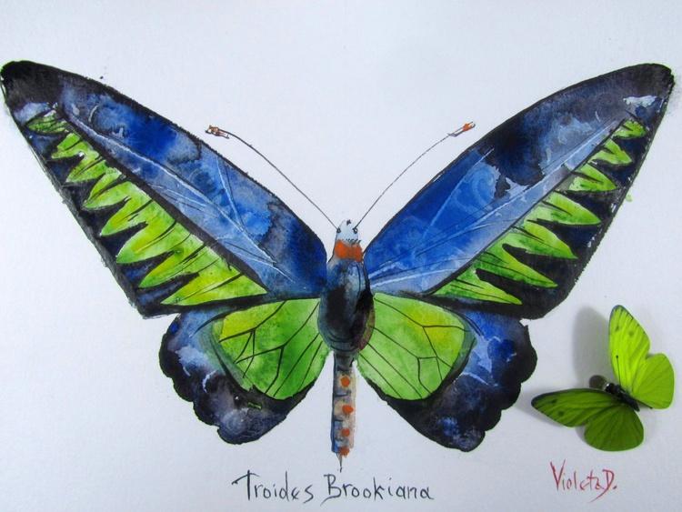 Troides Brookiana - Image 0
