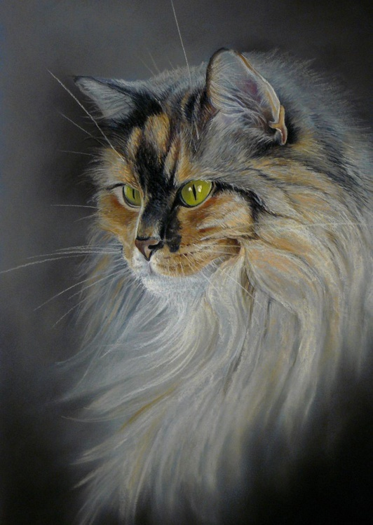 Longhaired cat - Image 0