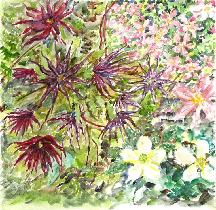 Clematis Flowers -