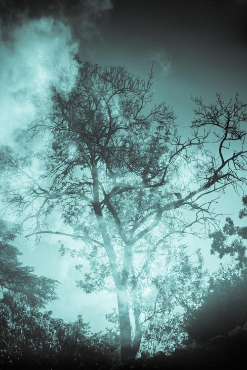 The secret life of trees 1 - Image 0