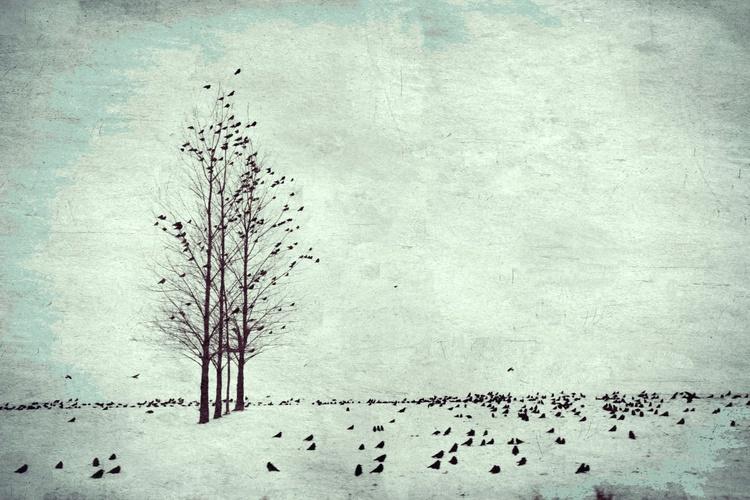 Winter birds blue - Image 0