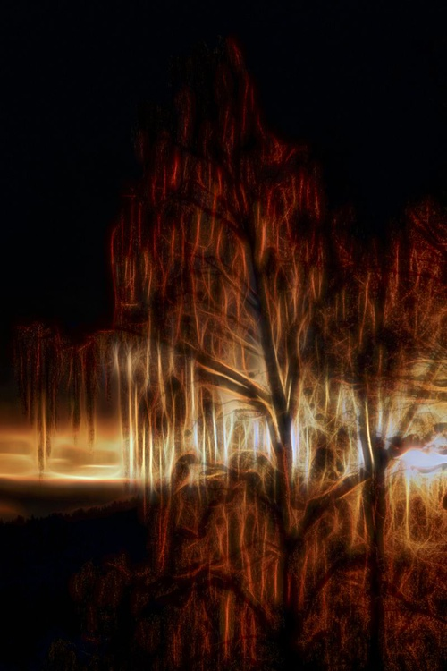 Burning Bush - Image 0