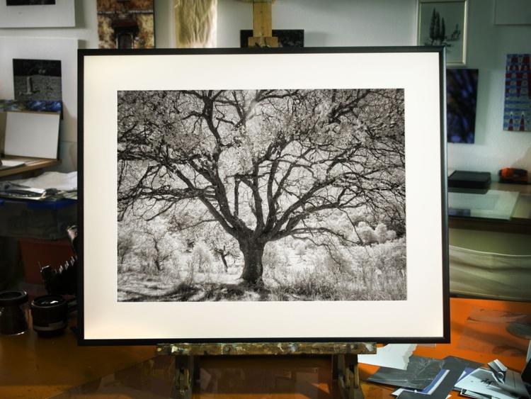 Ghost Tree - Image 0