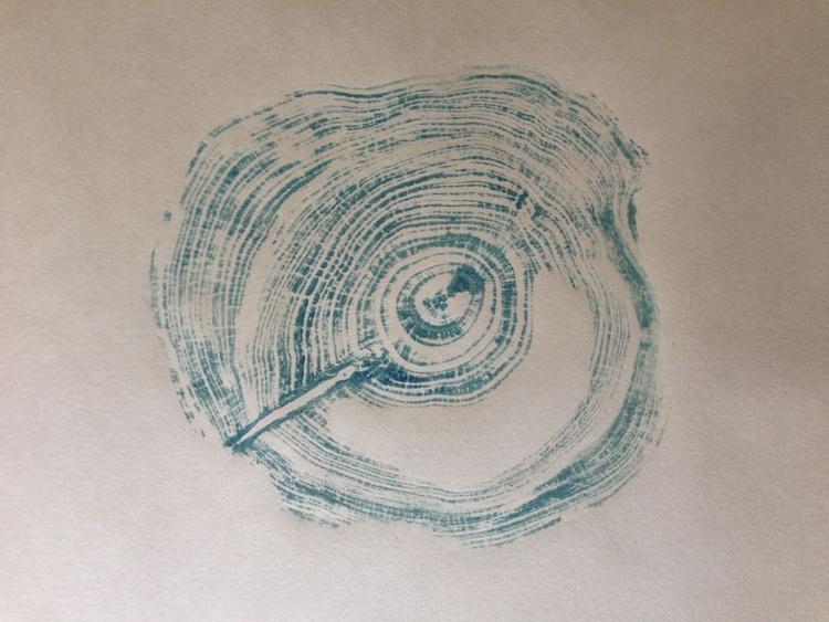 Pinus  sylvestris - Image 0