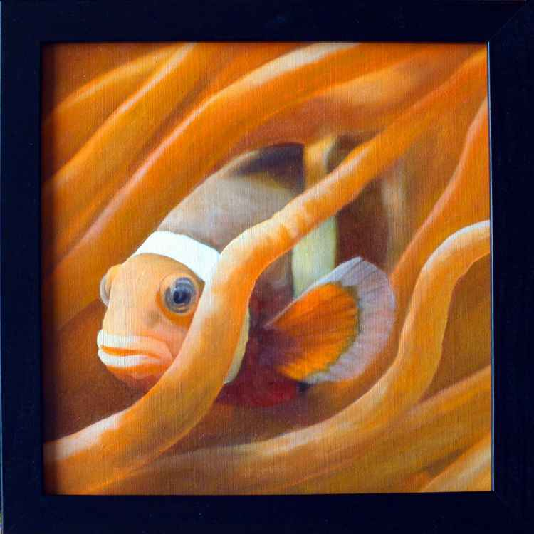 Clownfish -