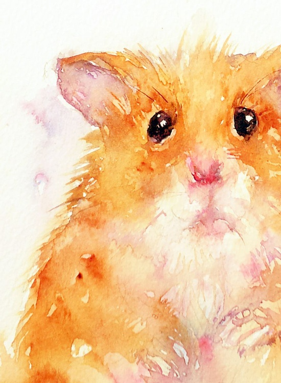 The Hamster - Image 0