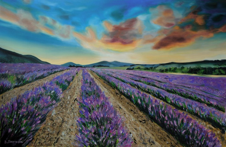 Lavender field 2 - Image 0