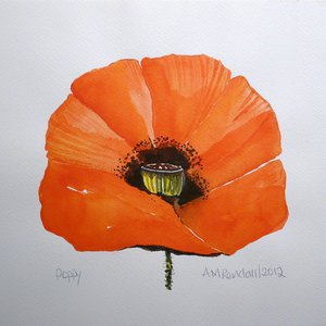 Red Poppy Head by Angela Rendall