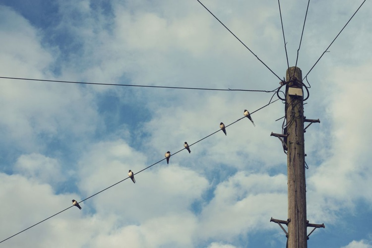 Birds On A Wire - Image 0