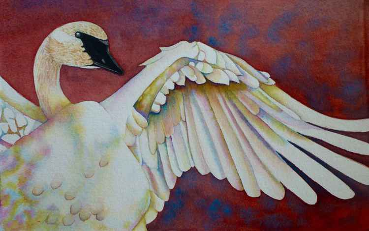 White Swan's Wing -