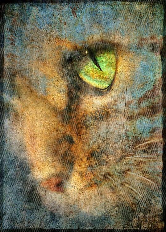 Cats eye - Image 0