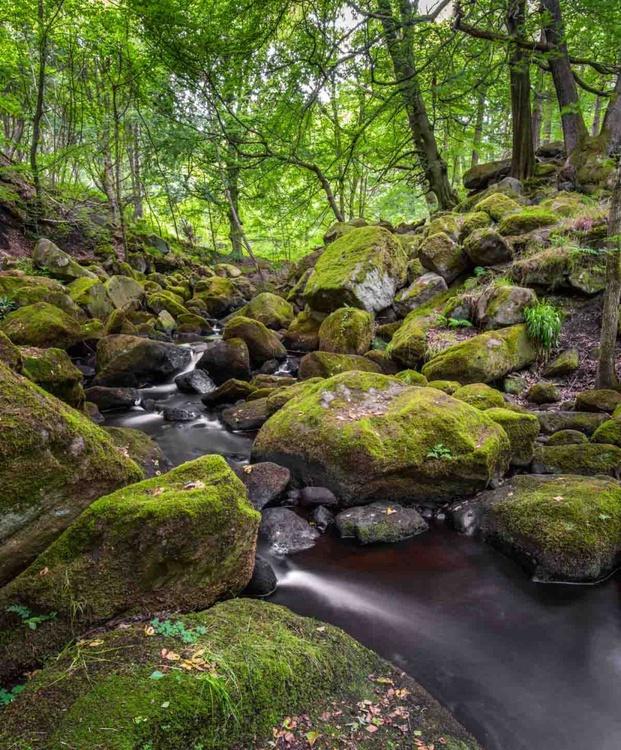 Woodland Stream  - Limited Edition Print 2015 - Image 0