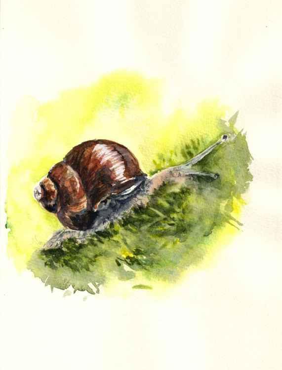 Snail -