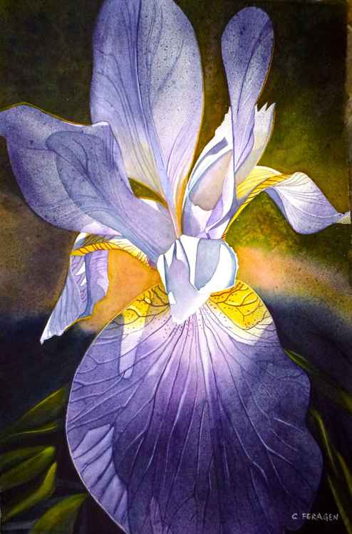No-beard Iris