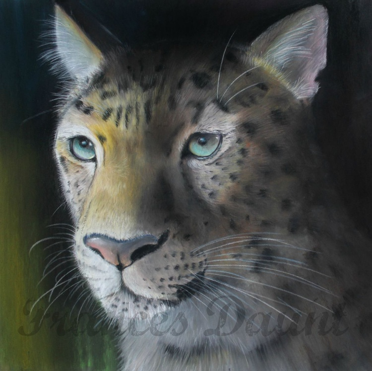Study of an Amur Leopard in pastels, framed - Image 0