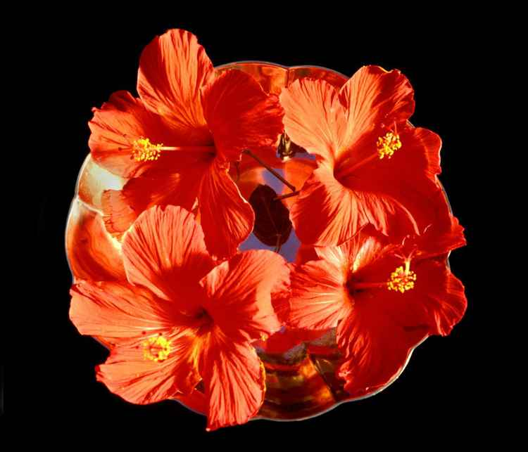 Red Hibiscus on a Silver Dish in Tonga -