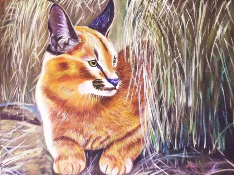 Wild Cat -