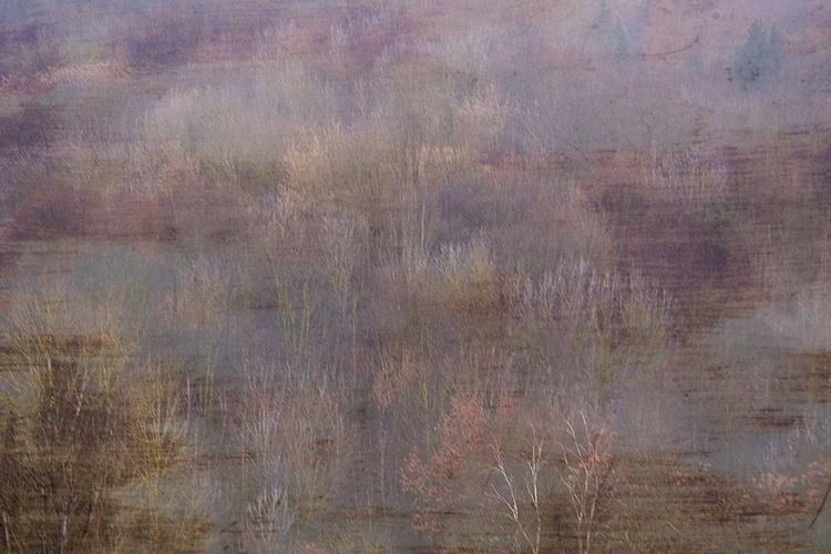 Woods - Image 0