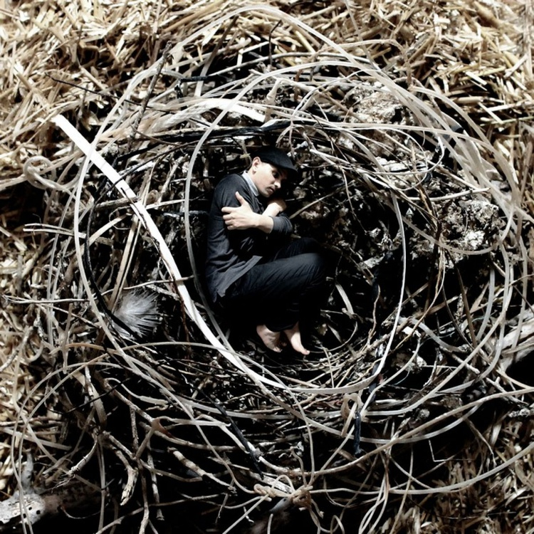 Into the Nest - Image 0