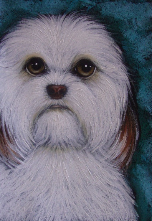 "HAVANESE DOG WAITING FOR YOU 5"" X 7"" - Image 0"