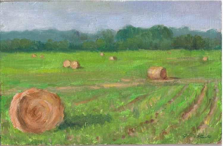 Summer Hay -