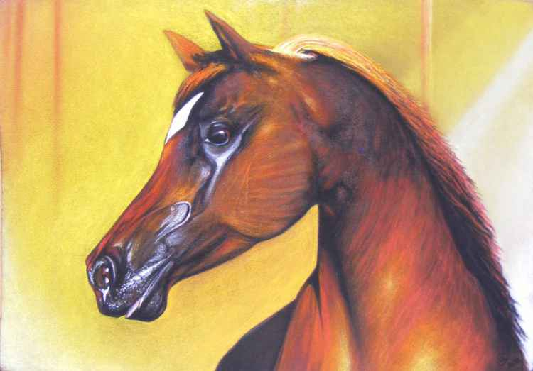 """Portrait of brown stallion"" -"