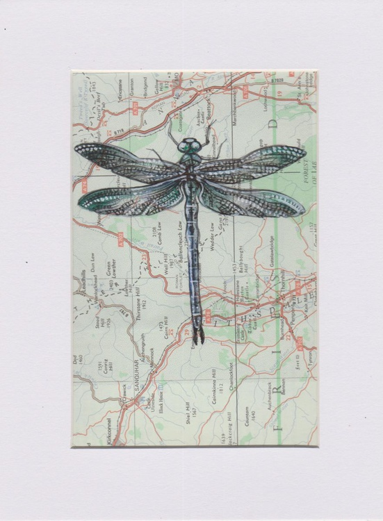 Dragonfly Migration 3 - Image 0