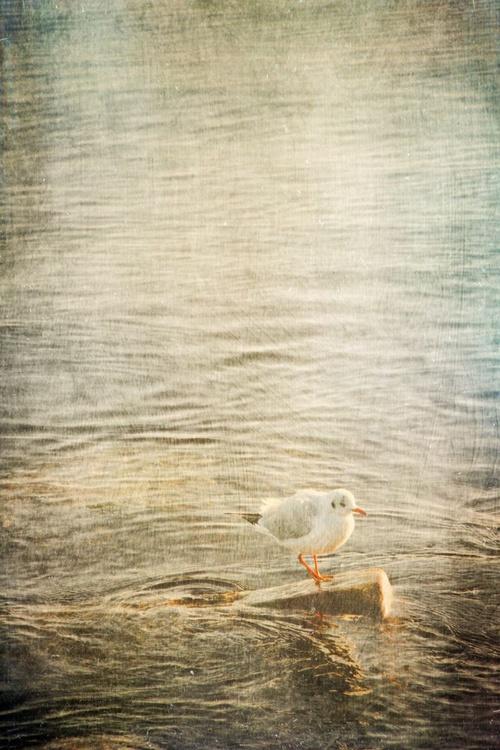 Seagull - Image 0