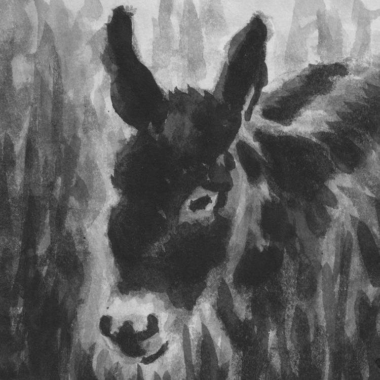 Donkey in the long grass No2 - Image 0