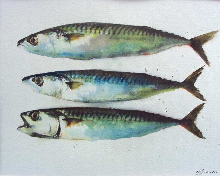 Three Mackerel Fish - Image 0